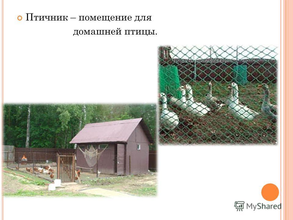 Птичник – помещение для домашней птицы.