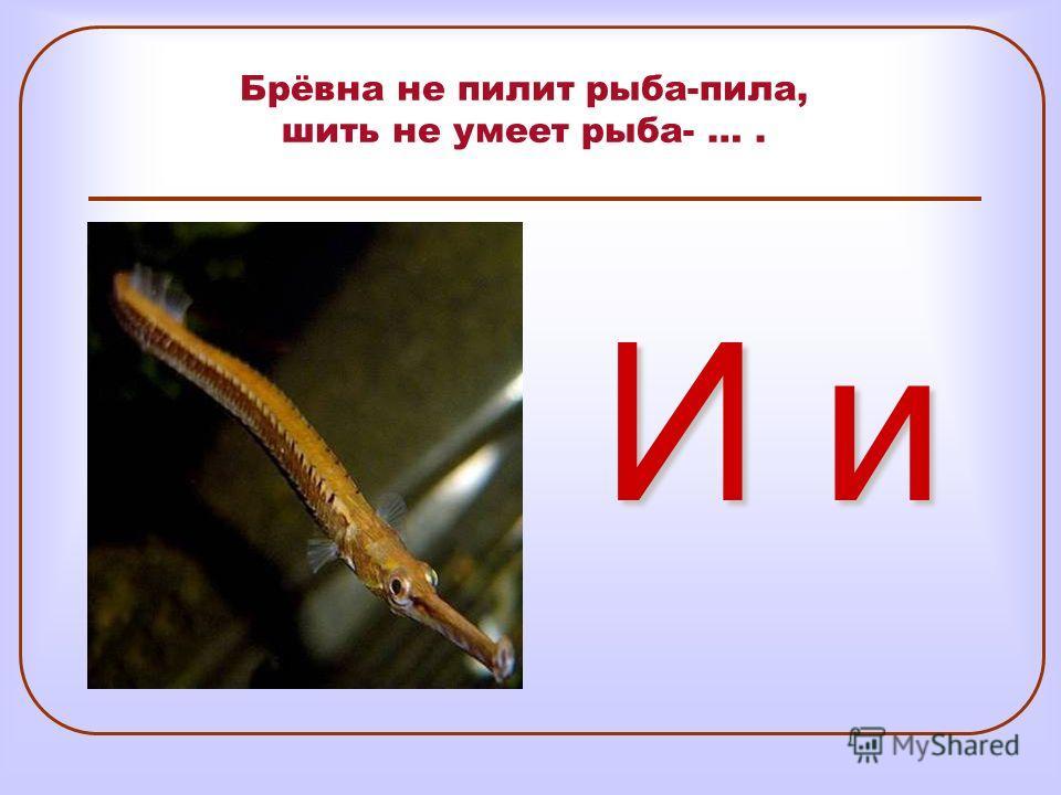Брёвна не пилит рыба-пила, шить не умеет рыба- …. И и