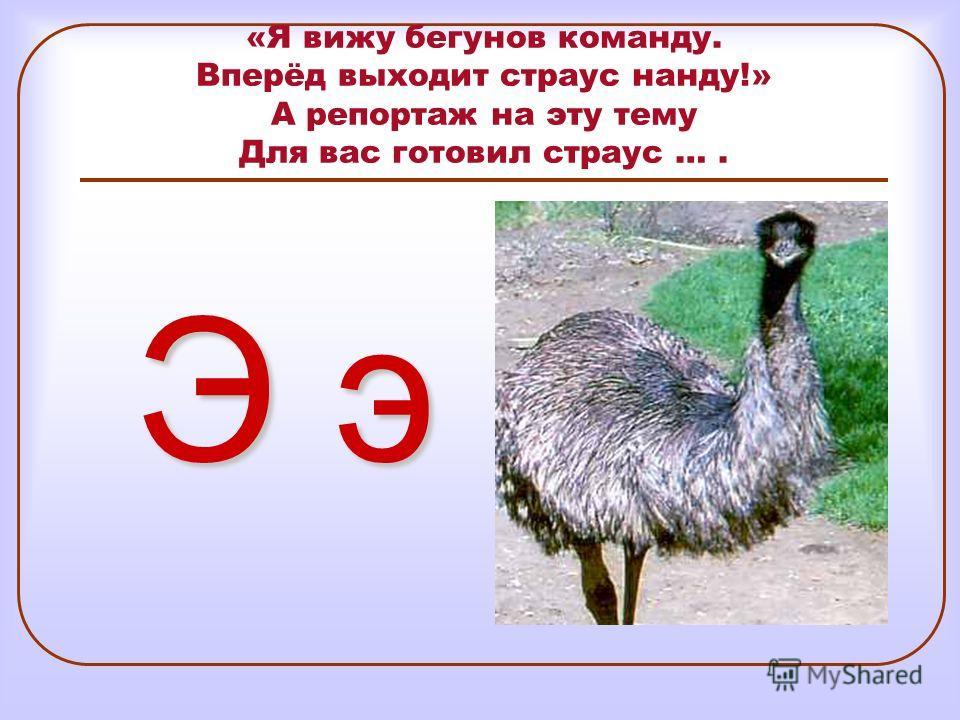 «Я вижу бегунов команду. Вперёд выходит страус нанду!» А репортаж на эту тему Для вас готовил страус …. Э э
