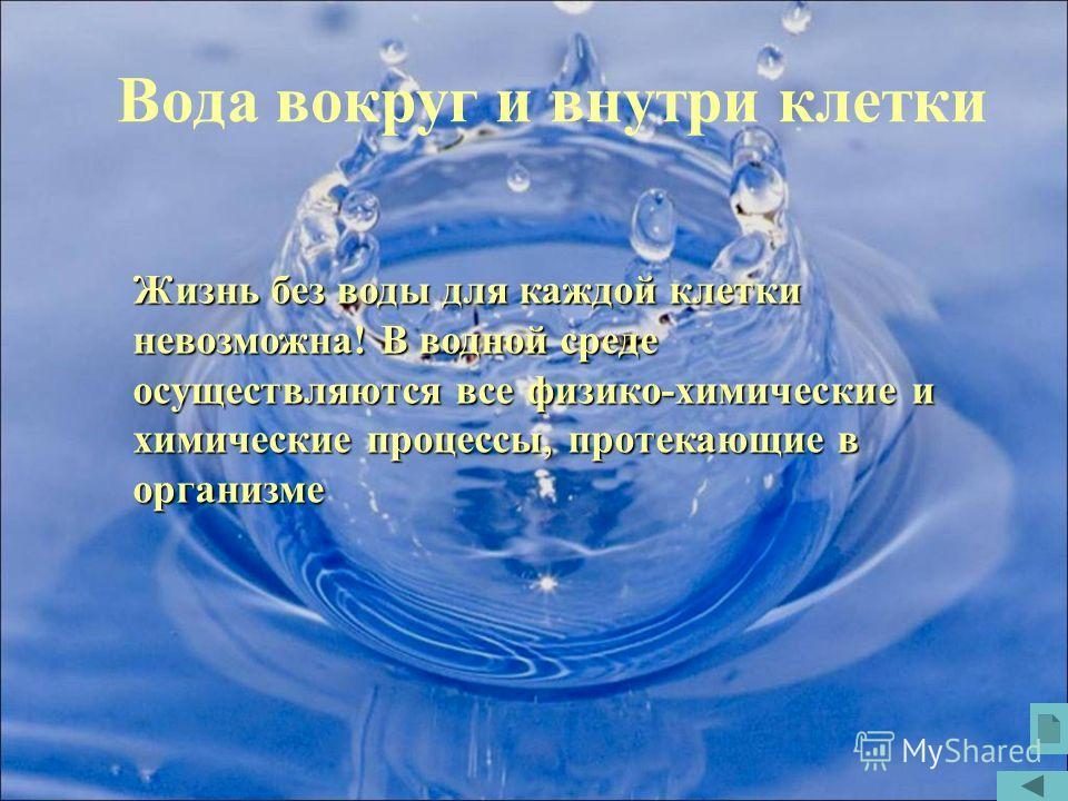 Вода вокруг и внутри клетки Жизнь без воды для каждой клетки невозможна! В водной среде осуществляются все физико-химические и химические процессы, протекающие в организме