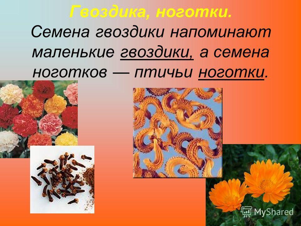 Гвоздика, ноготки. Семена гвоздики напоминают маленькие гвоздики, а семена ноготков птичьи ноготки.