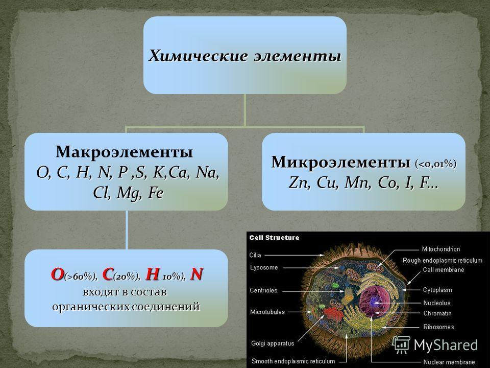 Химические элементы Макроэлементы O, C, H, N, P,S, K,Ca, Na, Cl, Mg, Fe Cl, Mg, Fe Микроэлементы (60%), C (20%), H 10%), N входят в состав органических соединений