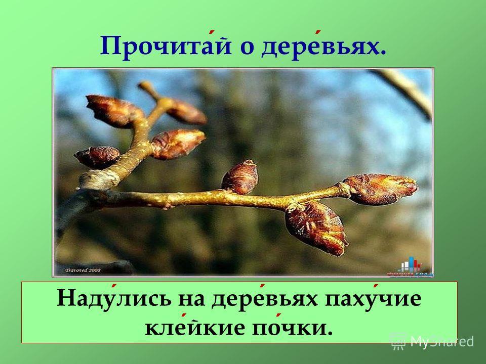 Прочитай о деревьях. Надулись на деревьях пахучие клейкие почки.