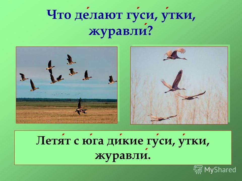 Что делают гуси, утки, журавли? Летят с юга дикие гуси, утки, журавли.
