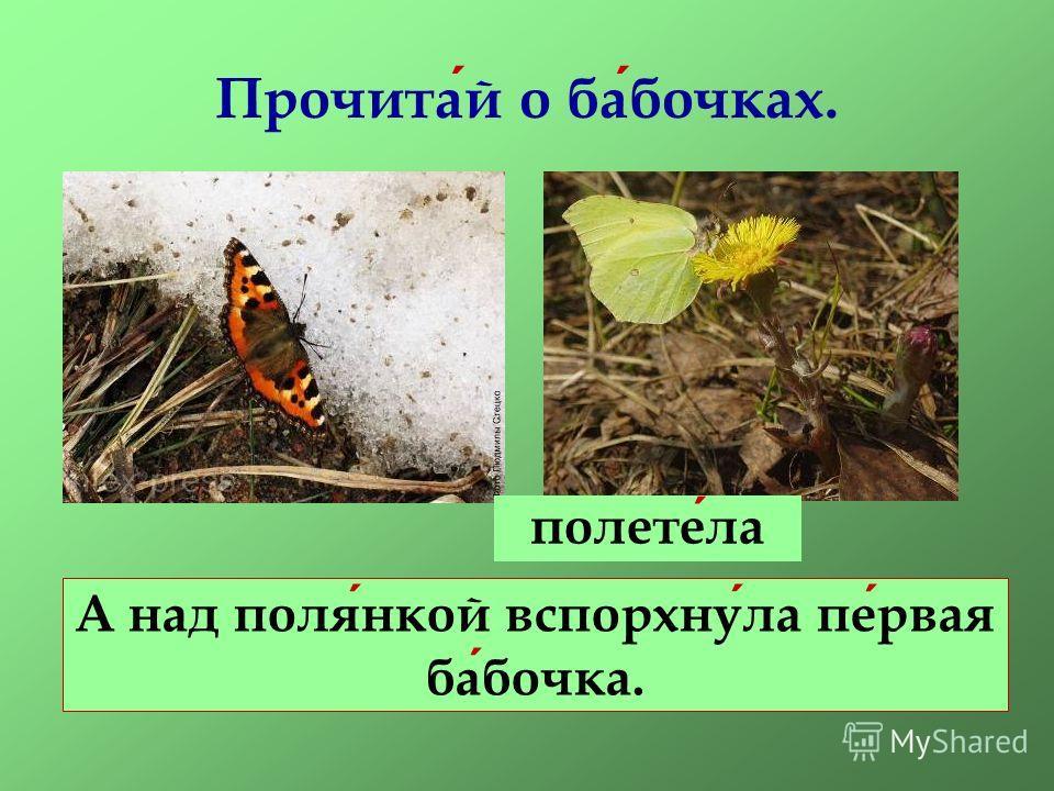 Прочитай о бабочках. А над полянкой вспорхнула первая бабочка. полетела