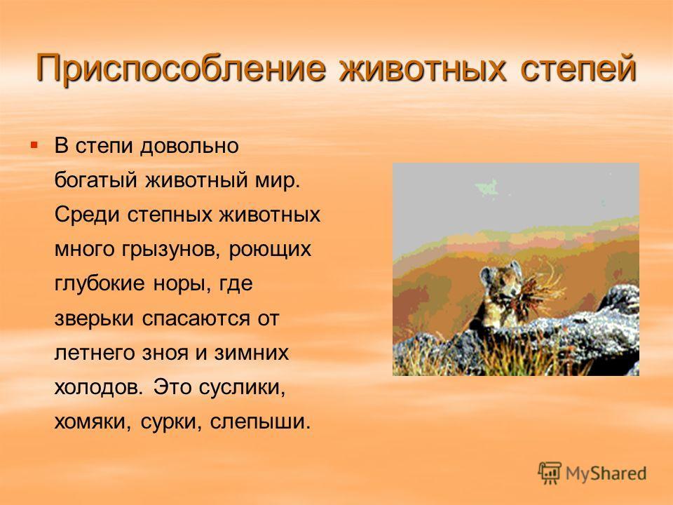 Приспособление животных степей В степи довольно богатый животный мир. Среди степных животных много грызунов, роющих глубокие норы, где зверьки спасаются от летнего зноя и зимних холодов. Это суслики, хомяки, сурки, слепыши.