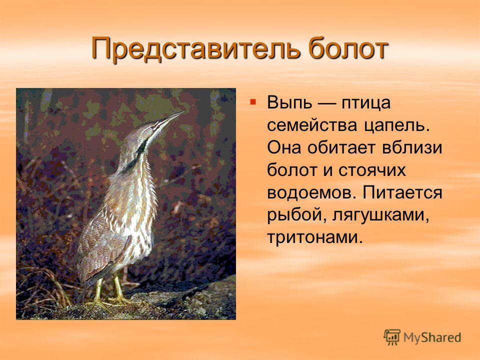 Представитель болот Выпь птица семейства цапель. Она обитает вблизи болот и стоячих водоемов. Питается рыбой, лягушками, тритонами.