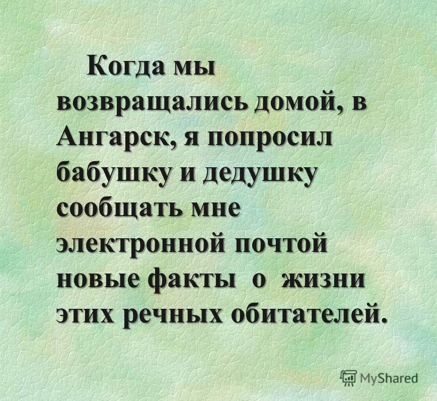 Когда мы возвращались домой, в Ангарск, я попросил бабушку и дедушку сообщать мне электронной почтой новые факты о жизни этих речных обитателей.