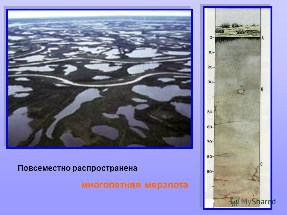 Тундра буквально усеяна неглубокими озерами и болотами. Повсеместно распространена многолетняя мерзлота