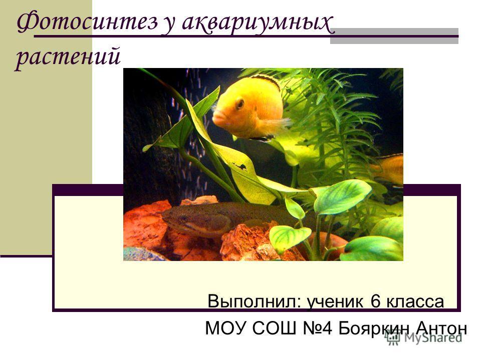 Фотосинтез у аквариумных растений Выполнил: ученик 6 класса МОУ СОШ 4 Бояркин Антон