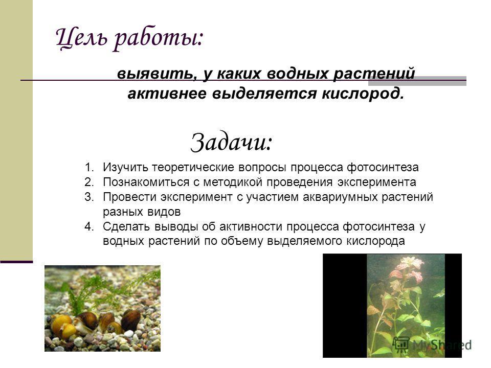 Цель работы: выявить, у каких водных растений активнее выделяется кислород. 1.Изучить теоретические вопросы процесса фотосинтеза 2.Познакомиться с методикой проведения эксперимента 3.Провести эксперимент с участием аквариумных растений разных видов 4