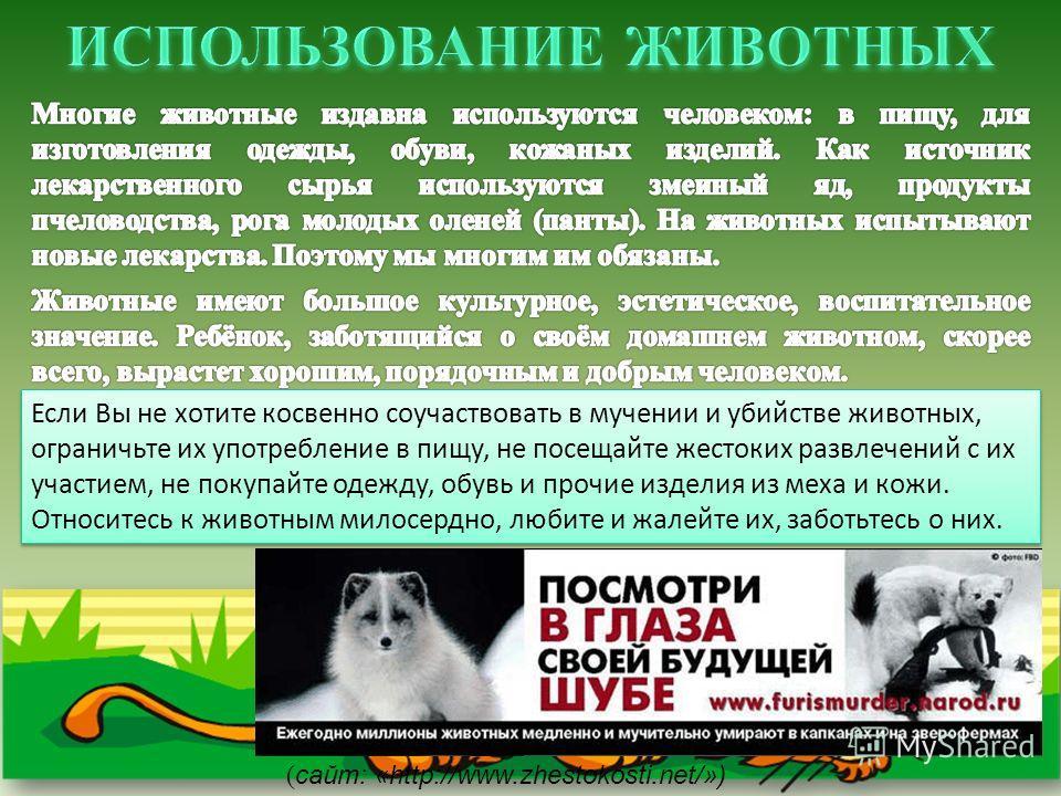 Если Вы не хотите косвенно соучаствовать в мучении и убийстве животных, ограничьте их употребление в пищу, не посещайте жестоких развлечений с их участием, не покупайте одежду, обувь и прочие изделия из меха и кожи. Относитесь к животным милосердно,