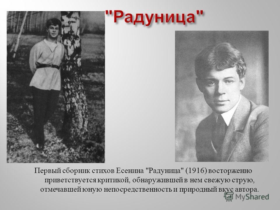 Первый сборник стихов Есенина  Радуница  (1916) восторженно приветствуется критикой, обнаружившей в нем свежую струю, отмечавшей юную непосредственность и природный вкус автора.