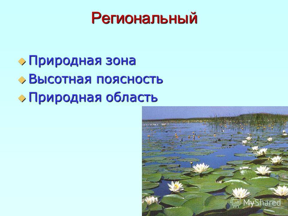 Региональный Природная зона Природная зона Высотная поясность Высотная поясность Природная область Природная область