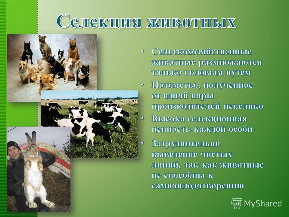 Сельскохозяйственные животные размножаются только половым путем Потомство, полученное от одной пары производителей невелико Высока селекционная ценность каждой особи Затруднительно выведение чистых линий, так как животные не способны к самооплодотвор