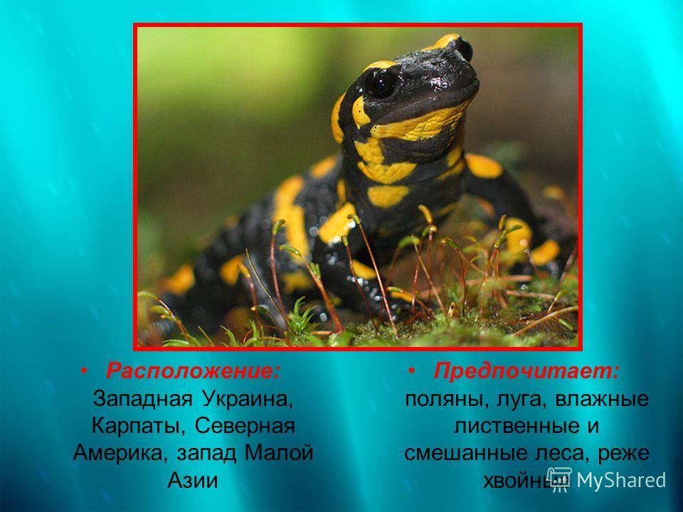 Расположение: Западная Украина, Карпаты, Северная Америка, запад Малой Азии Предпочитает: поляны, луга, влажные лиственные и смешанные леса, реже хвойные