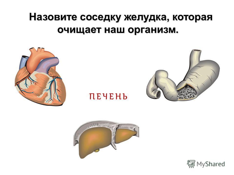 Г О Л О В Н О Й М О З Г «Главный командир» нашего организма? «Главный командир» нашего организма?