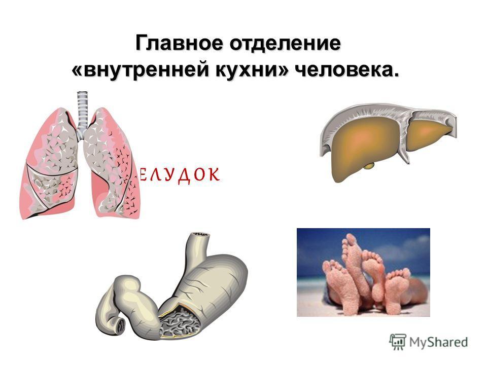П Е Ч Е Н Ь Назовите соседку желудка, которая очищает наш организм. Назовите соседку желудка, которая очищает наш организм.