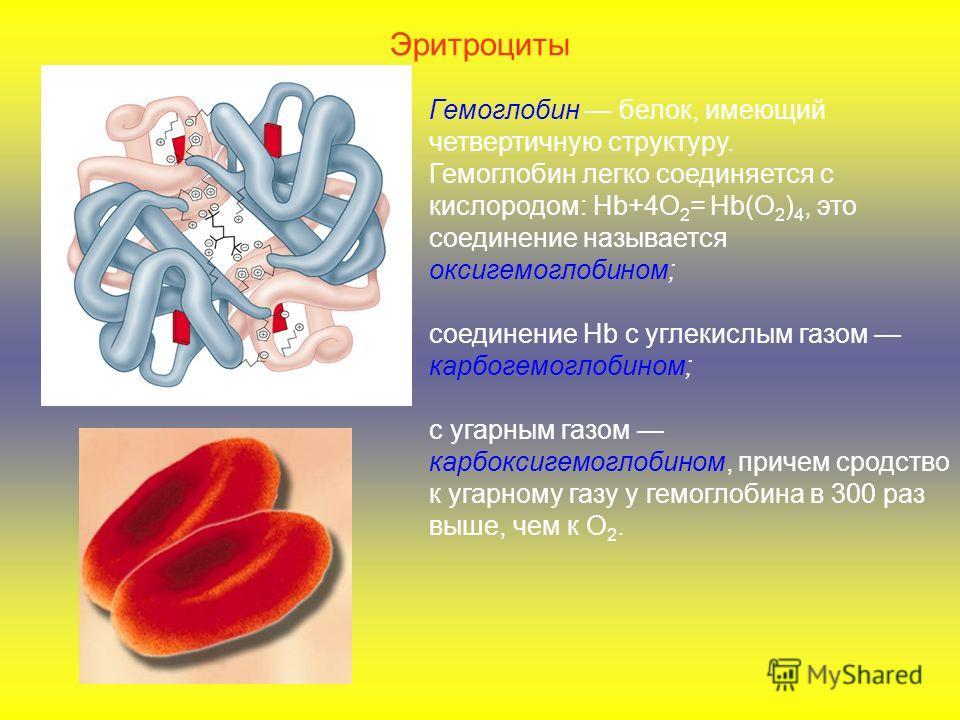 Эритроциты Гемоглобин белок, имеющий четвертичную структуру. Гемоглобин легко соединяется с кислородом: Hb+4О 2 = Hb(О 2 ) 4, это соединение называется оксигемоглобином; соединение Hb с углекислым газом карбогемоглобином; с угарным газом карбоксигемо