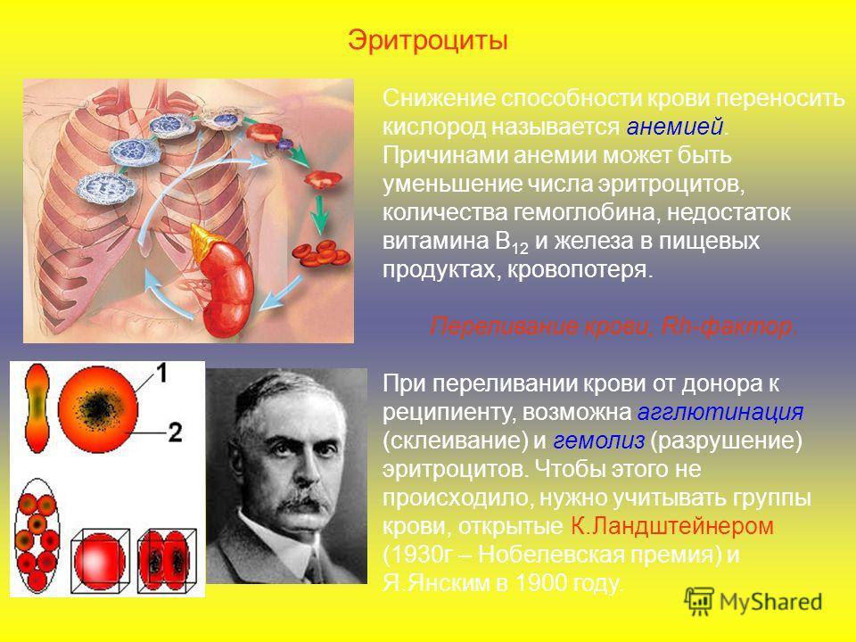 Снижение способности крови переносить кислород называется анемией. Причинами анемии может быть уменьшение числа эритроцитов, количества гемоглобина, недостаток витамина В 12 и железа в пищевых продуктах, кровопотеря. Переливание крови, Rh-фактор. При