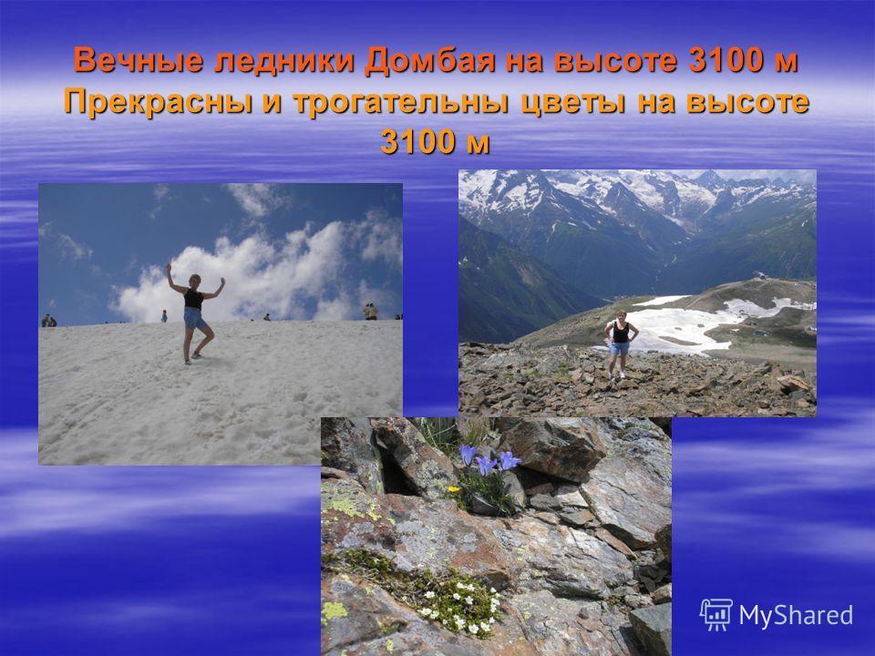 Вечные ледники Домбая на высоте 3100 м Прекрасны и трогательны цветы на высоте 3100 м