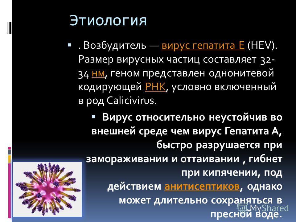 Этиология. Возбудитель вирус гепатита Е (HEV). Размер вирусных частиц составляет 32- 34 нм, геном представлен однонитевой кодирующей РНК, условно включенный в род Calicivirus.вирус гепатита ЕнмРНК Вирус относительно неустойчив во внешней среде чем ви