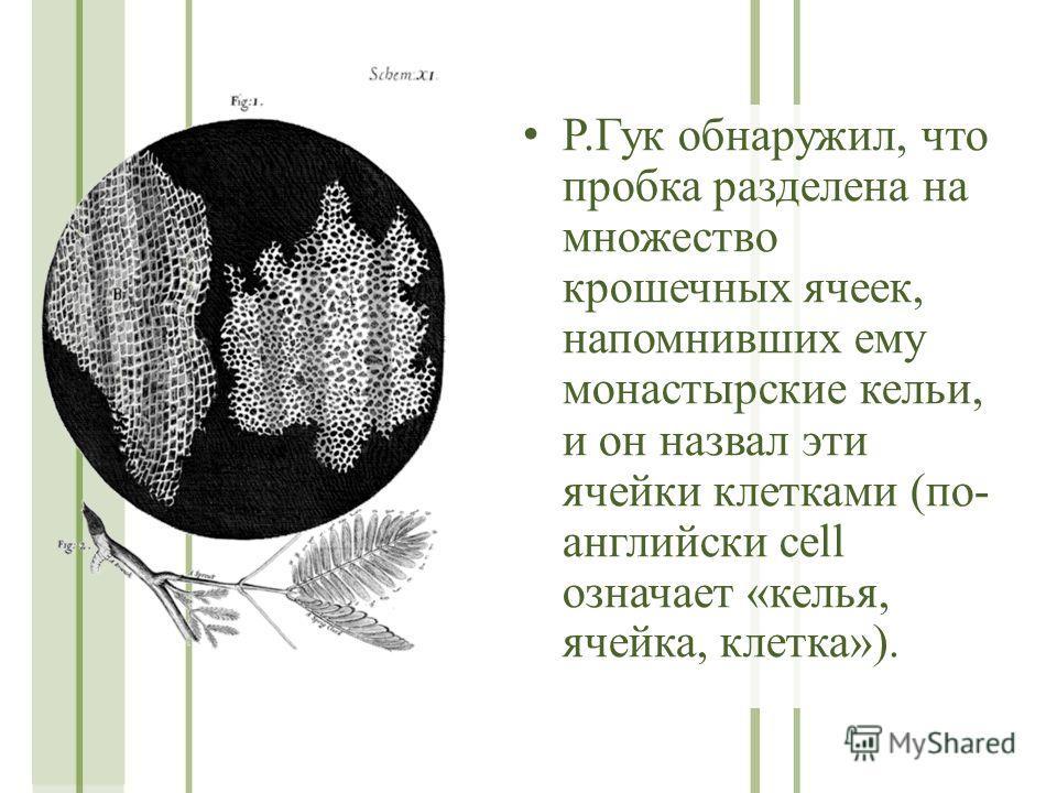 Р.Гук обнаружил, что пробка разделена на множество крошечных ячеек, напомнивших ему монастырские кельи, и он назвал эти ячейки клетками (по- английски cell означает «келья, ячейка, клетка»).