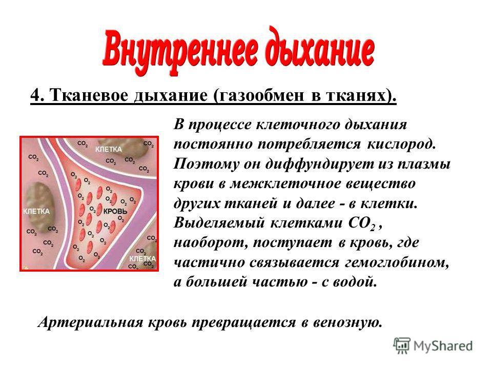 4. Тканевое дыхание (газообмен в тканях). В процессе клеточного дыхания постоянно потребляется кислород. Поэтому он диффундирует из плазмы крови в межклеточное вещество других тканей и далее - в клетки. Выделяемый клетками CO 2, наоборот, поступает в