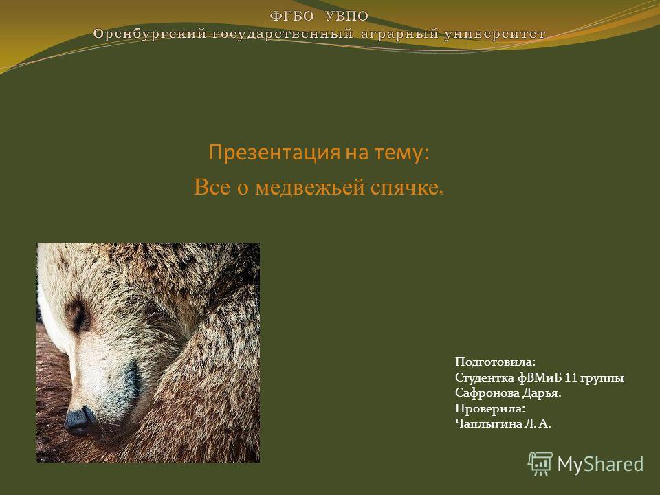 Презентация на тему: Все о медвежьей спячке. Подготовила: Студентка фВМиБ 11 группы Сафронова Дарья. Проверила: Чаплыгина Л. А.