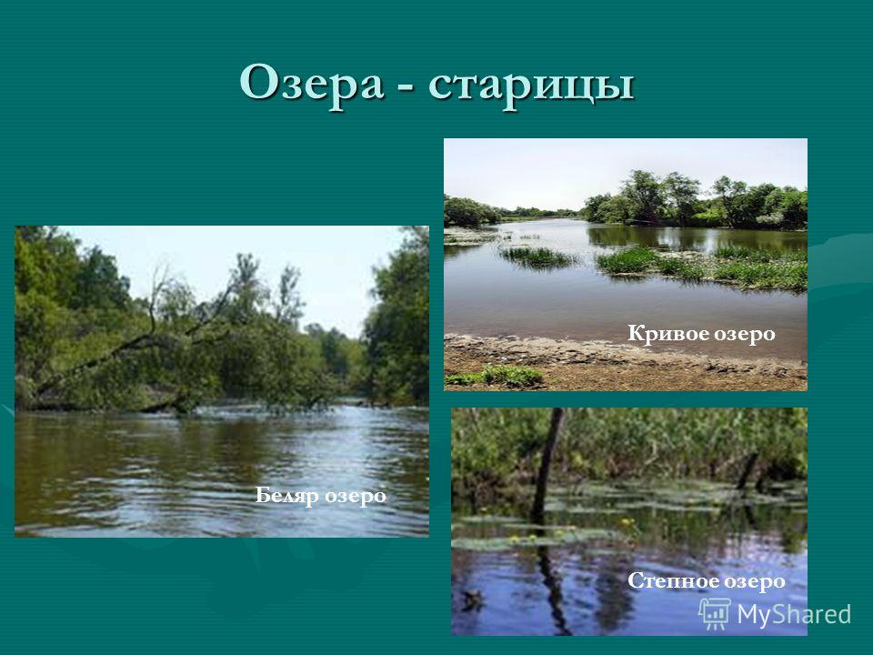 Озера - старицы Беляр озеро Кривое озеро Степное озеро