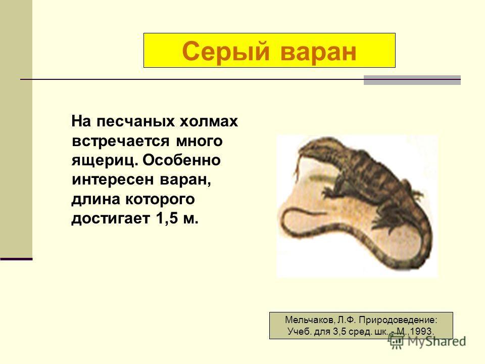 На песчаных холмах встречается много ящериц. Особенно интересен варан, длина которого достигает 1,5 м. Серый варан Мельчаков, Л.Ф. Природоведение: Учеб. для 3,5 сред. шк. - М.,1993.