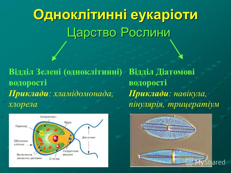 Царство Рослини Відділ Зелені (одноклітинні) водорості Приклади: хламідомонада, хлорела Відділ Діатомові водорості Приклади: навікула, пінулярія, трицератіум
