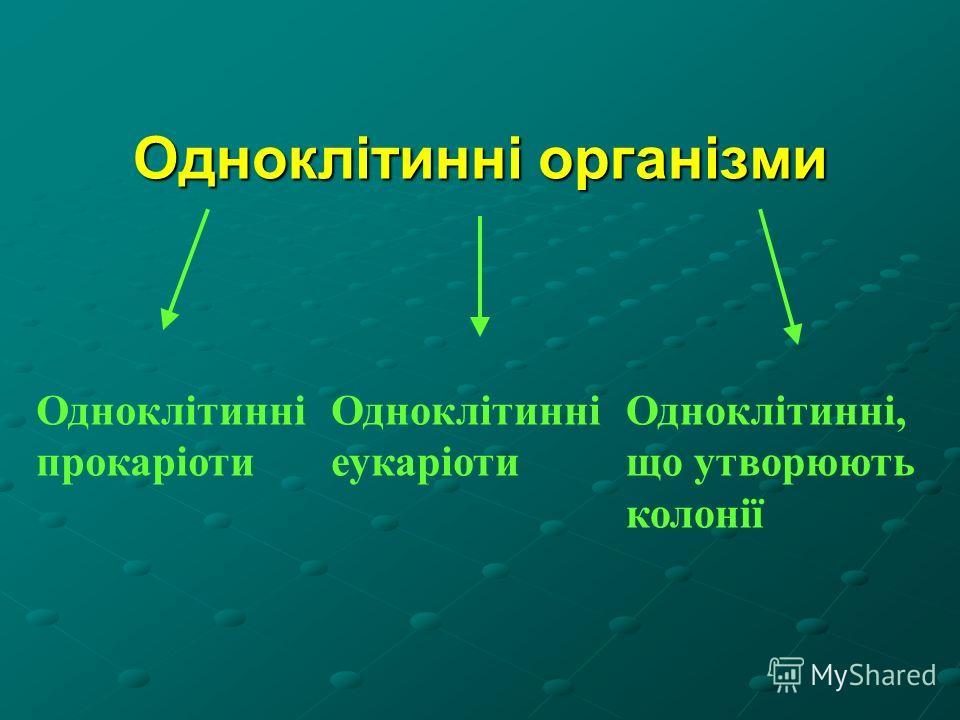 Одноклітинні організми Одноклітинні прокаріоти Одноклітинні еукаріоти Одноклітинні, що утворюють колонії