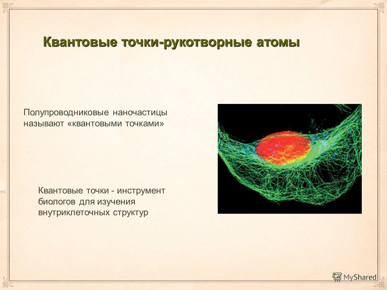 Квантовые точки-рукотворные атомы Полупроводниковые наночастицы называют «квантовыми точками» Квантовые точки - инструмент биологов для изучения внутриклеточных структур