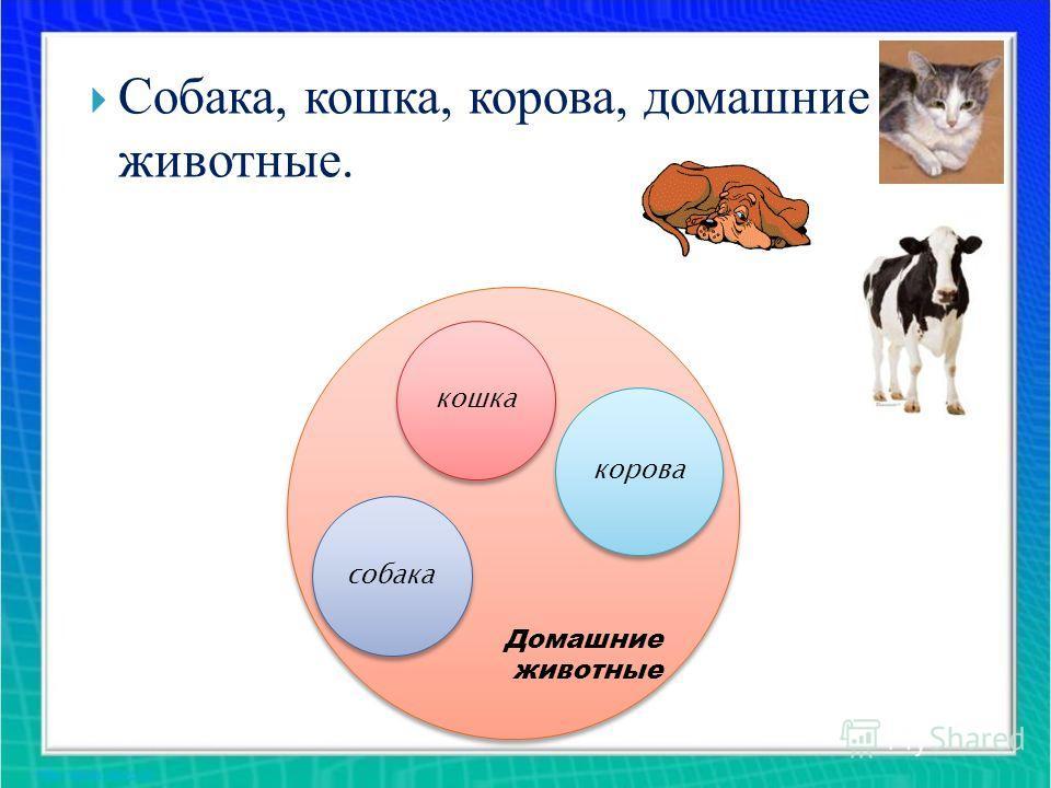Домашние животные Домашние животные кошка корова собака Собака, кошка, корова, домашние животные.