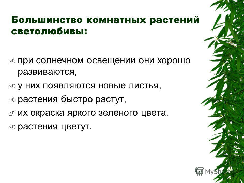 Большинство комнатных растений светолюбивы: при солнечном освещении они хорошо развиваются, у них появляются новые листья, растения быстро растут, их окраска яркого зеленого цвета, растения цветут.