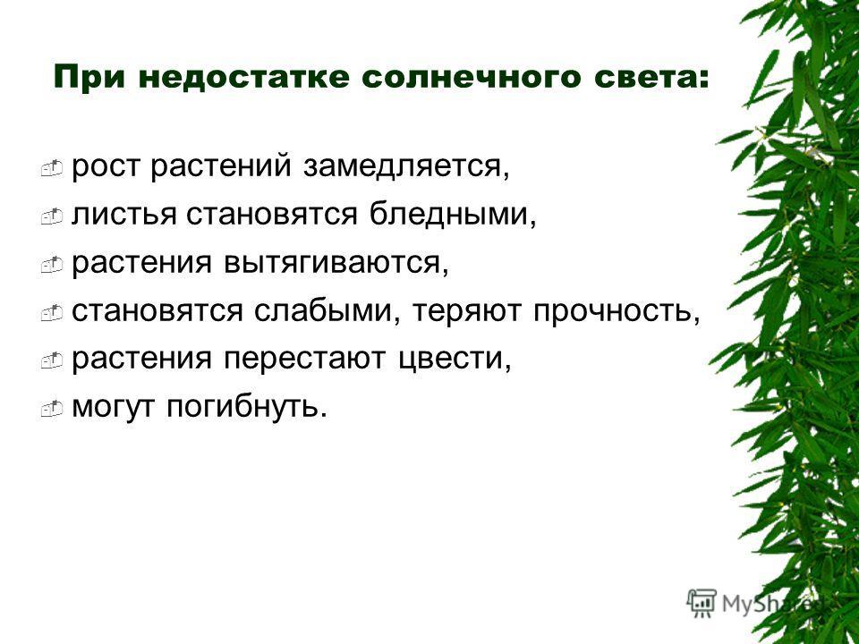 При недостатке солнечного света: рост растений замедляется, листья становятся бледными, растения вытягиваются, становятся слабыми, теряют прочность, растения перестают цвести, могут погибнуть.