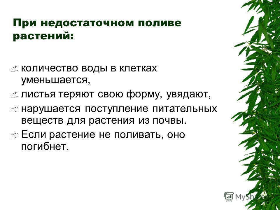При недостаточном поливе растений: количество воды в клетках уменьшается, листья теряют свою форму, увядают, нарушается поступление питательных веществ для растения из почвы. Если растение не поливать, оно погибнет.