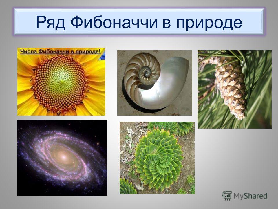 Ряд Фибоначчи в природе