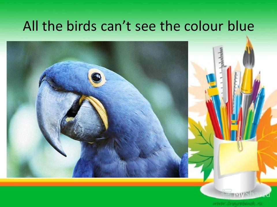 All the birds cant see the colour blue