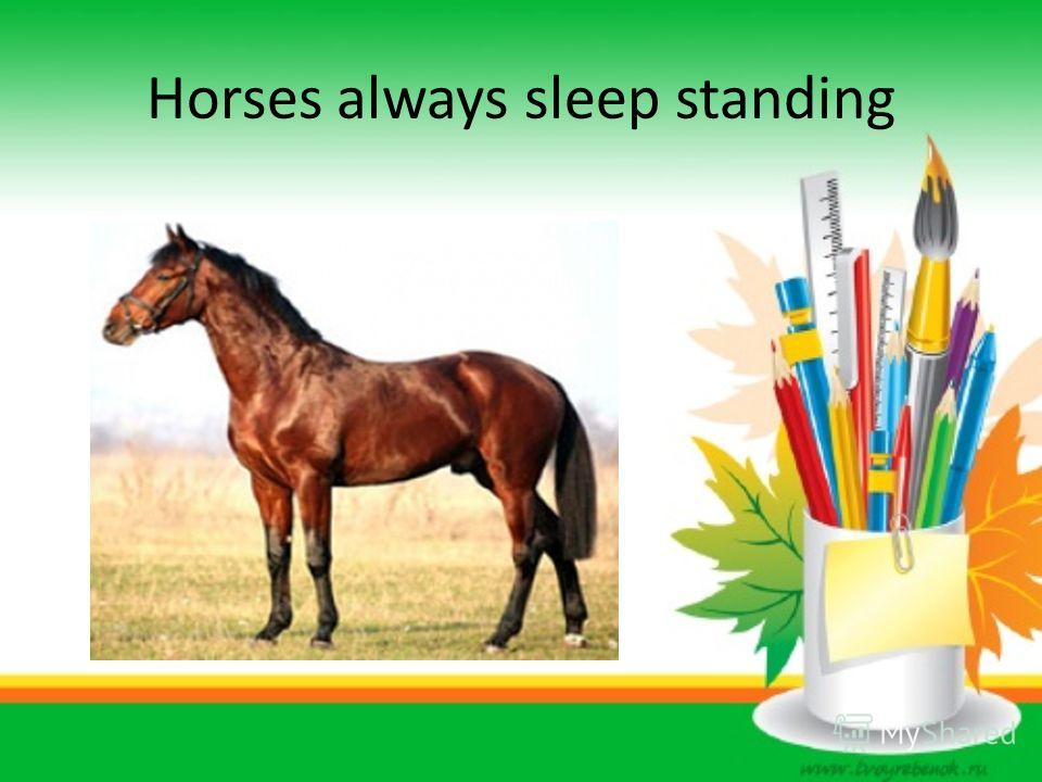 Horses always sleep standing