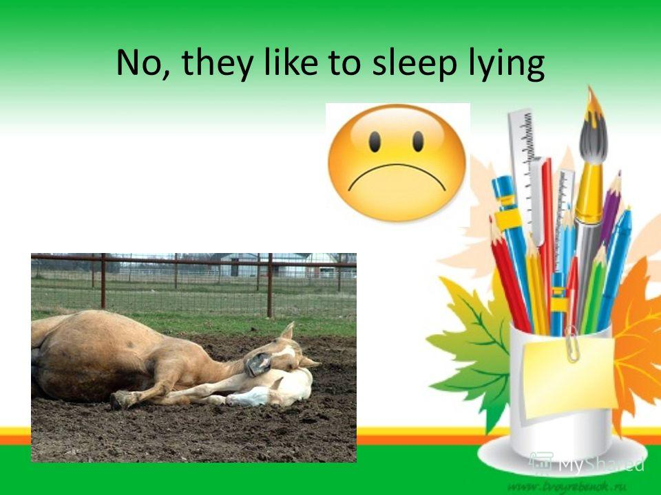 No, they like to sleep lying