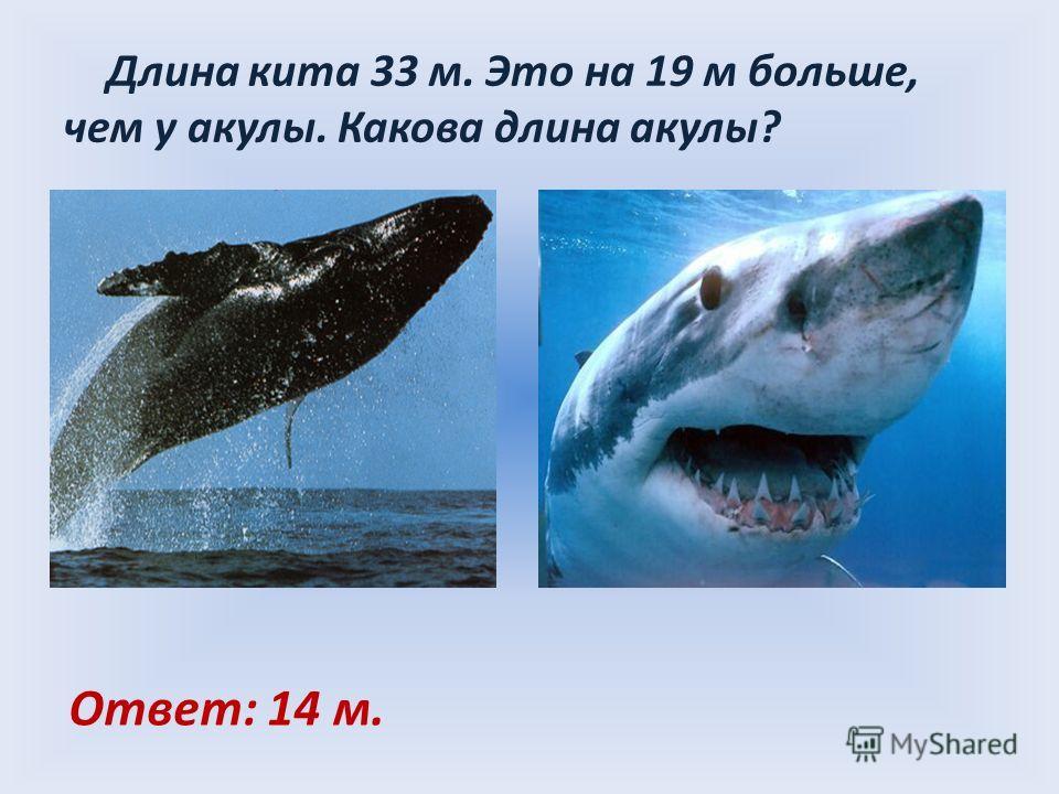 Длина кита 33 м. Это на 19 м больше, чем у акулы. Какова длина акулы? Ответ: 14 м.