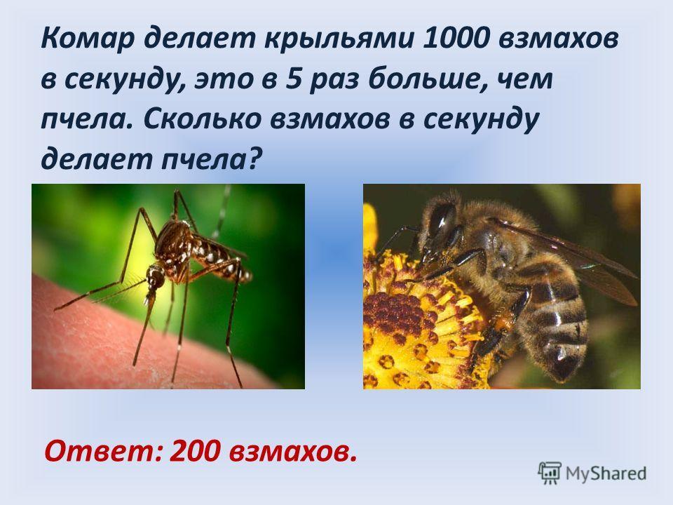 Комар делает крыльями 1000 взмахов в секунду, это в 5 раз больше, чем пчела. Сколько взмахов в секунду делает пчела? Ответ: 200 взмахов.