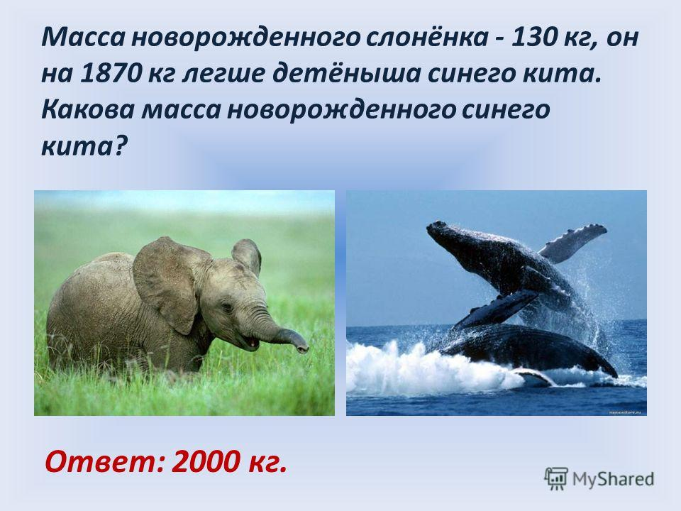 Масса новорожденного слонёнка - 130 кг, он на 1870 кг легше детёныша синего кита. Какова масса новорожденного синего кита? Ответ: 2000 кг.