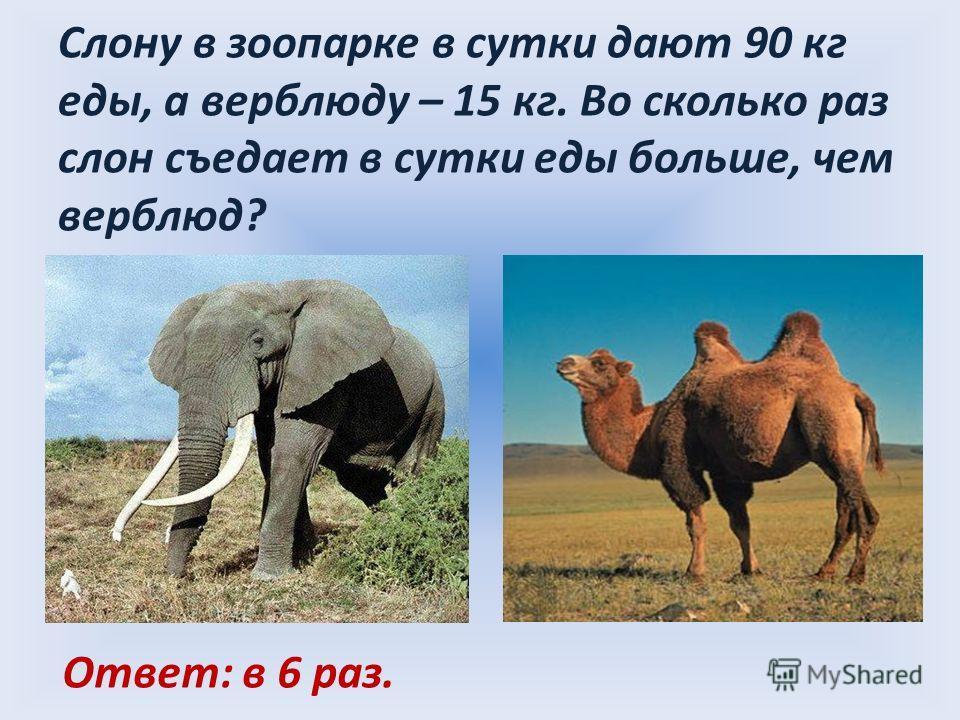 Слону в зоопарке в сутки дают 90 кг еды, а верблюду – 15 кг. Во сколько раз слон съедает в сутки еды больше, чем верблюд? Ответ: в 6 раз.