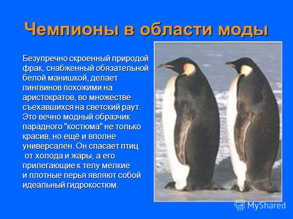 Чемпионы в области моды Безупречно скроенный природой фрак, снабженный обязательной белой манишкой, делает пингвинов похожими на аристократов, во множестве съехавшихся на светский раут. Это вечно модный образчик парадного