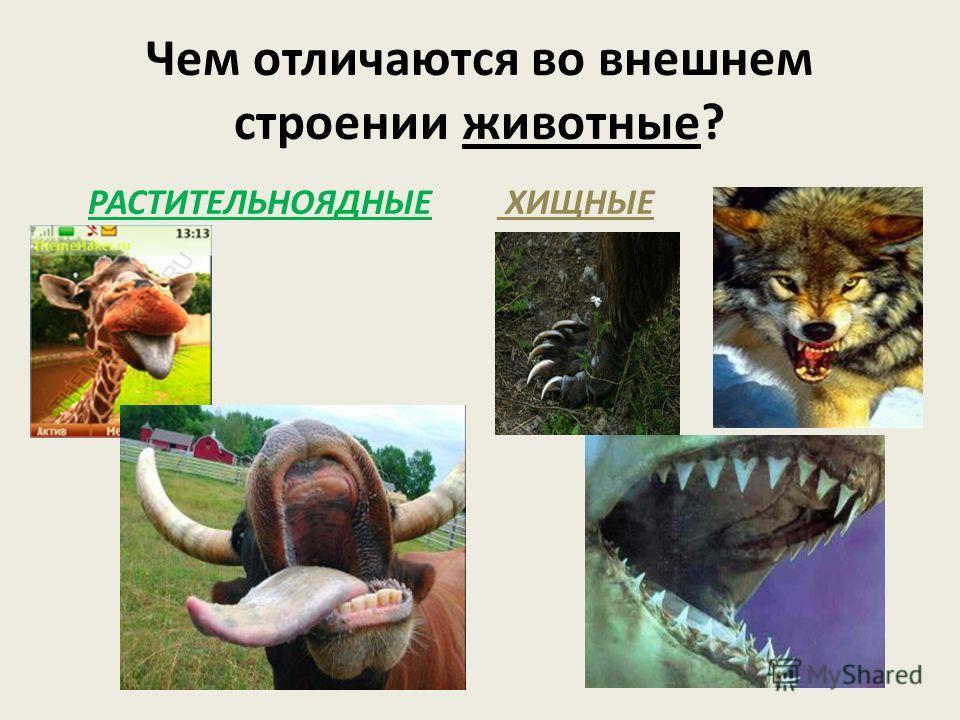 Чем отличаются во внешнем строении животные? РАСТИТЕЛЬНОЯДНЫЕ ХИЩНЫЕ