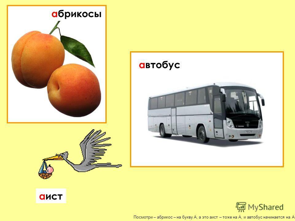 Посмотри – абрикос – на букву А, а это аист – тоже на А, и автобус начинается на А! абрикосы автобус аист