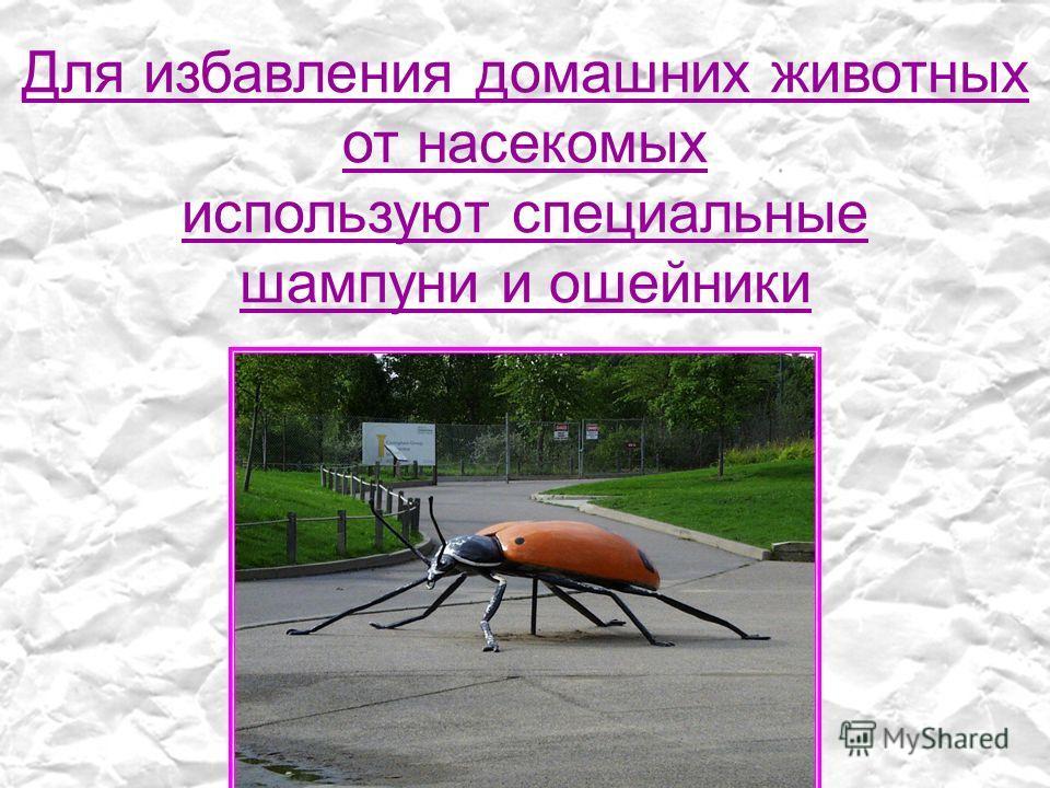 Для избавления домашних животных от насекомых используют специальные шампуни и ошейники
